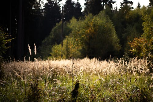 Free stock photo of beige, dark green, field
