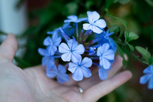 Free stock photo of beautiful flowers, blue flower, cold flower