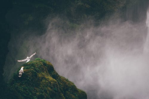 Birds Flying Above Grass Covered Mountain
