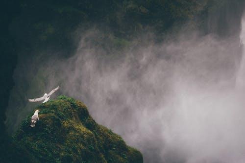 Základová fotografie zdarma na téma hory, kouř, kouřit, mlha