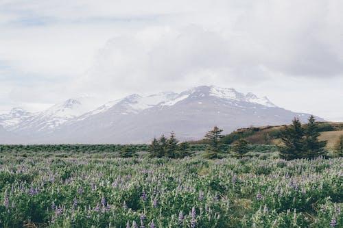 Kostenloses Stock Foto zu berge, blumen, landschaft, natur