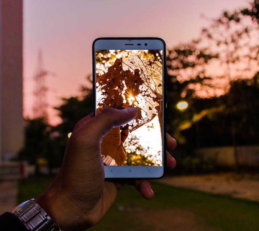 Person Capturing Tree