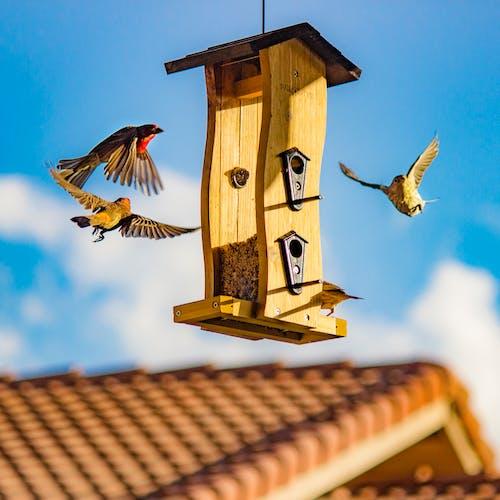 Ingyenes stockfotó építészet, fából készült, madáretető, madárház témában