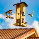 roof, architecture, birds