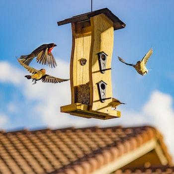 Brown and Beige Finch Birds Surround Bird House