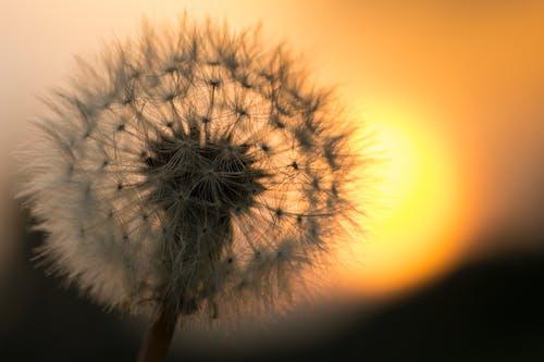 Photos gratuites de coucher de soleil, coucher du soleil, fleur, fleurir