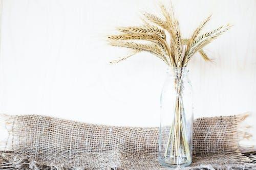 Beyaz arka plan, bitki örtüsü, buğday, cam şişe içeren Ücretsiz stok fotoğraf