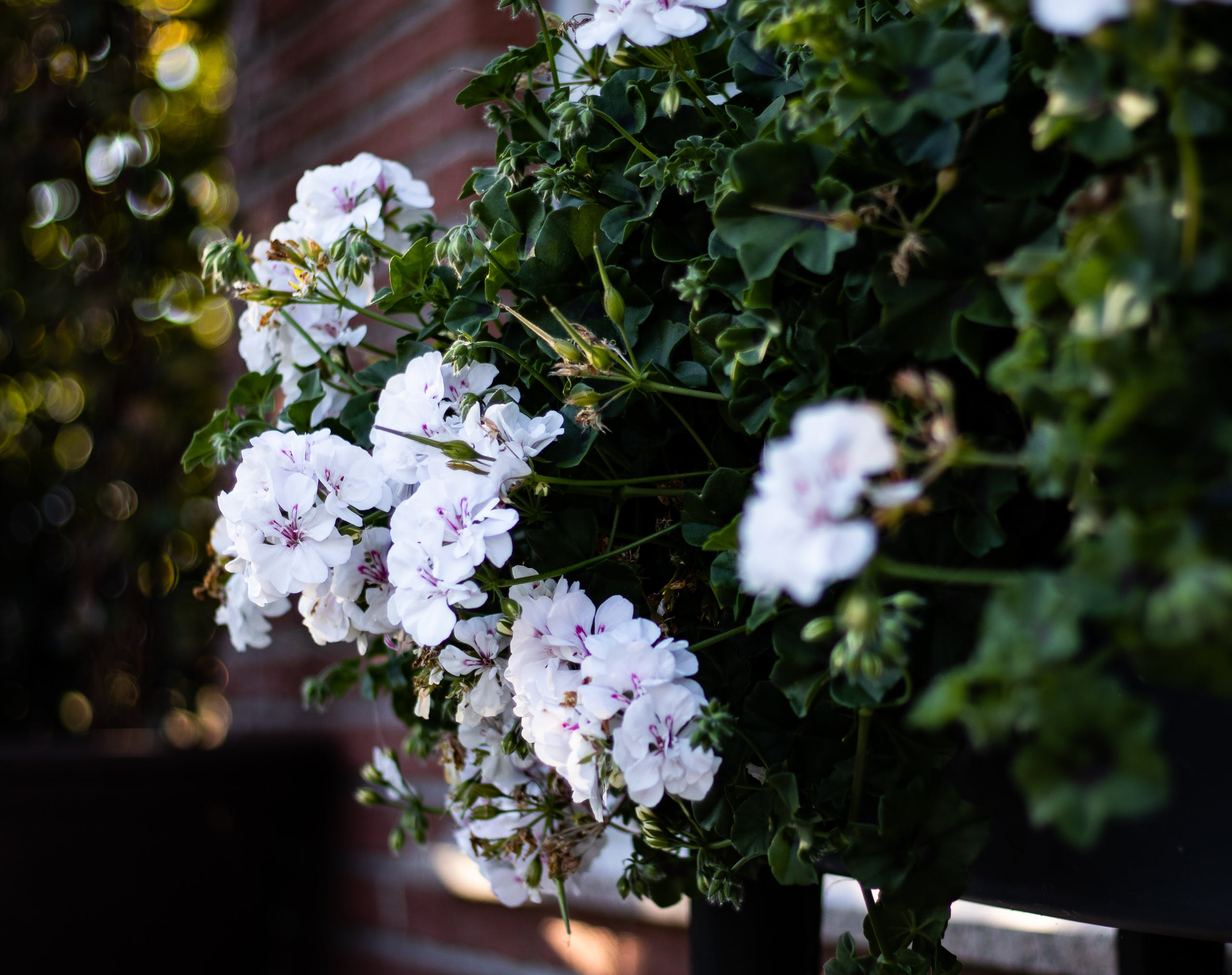 Free stock photo of beautiful flowers, flower, flower garden, garden