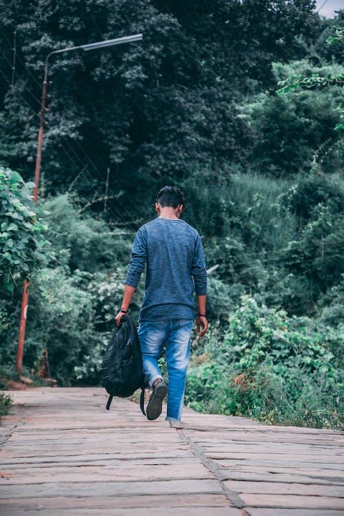 Kostenloses Stock Foto zu #indien, baum, blick in die natur, dunkelgrün