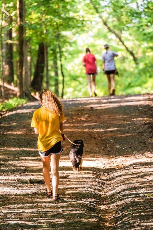 Kostenloses Stock Foto zu aktiv, erholung, freizeit, hund zu fuß