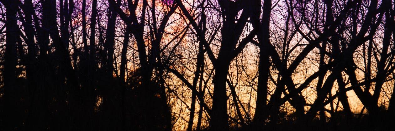나무, 일몰, 파노라마