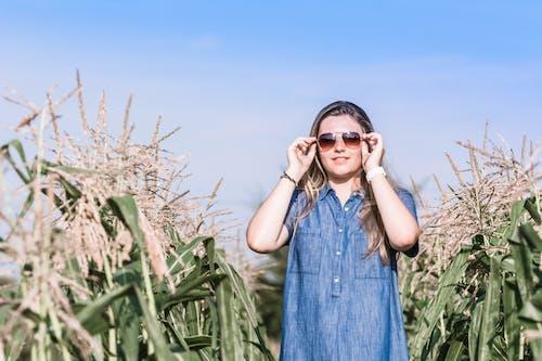 Fotobanka sbezplatnými fotkami na tému dievča, kukurica, kukuričné pole, slnečné okuliare