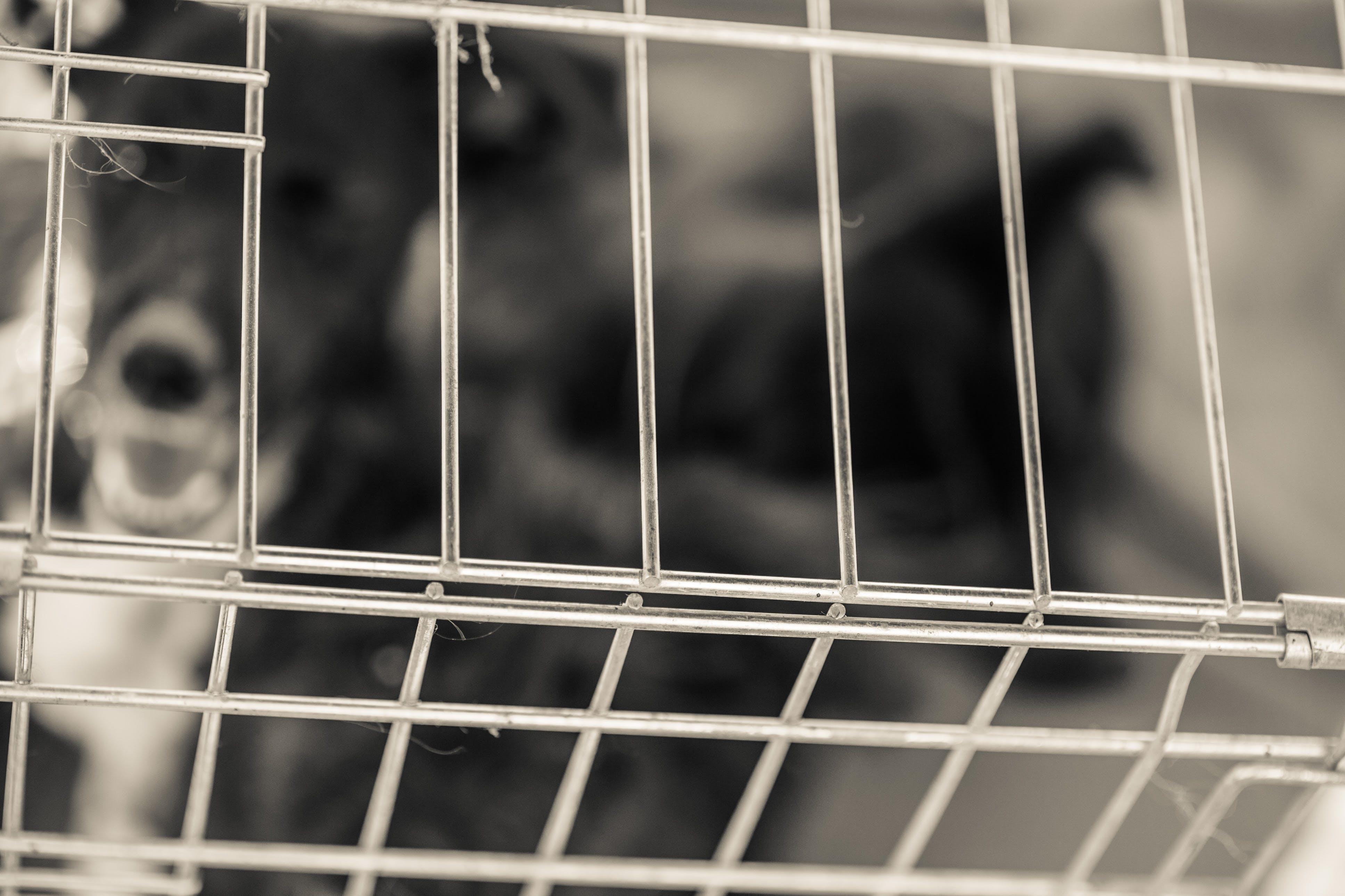 Foto profissional grátis de animal vadio, cachorro, cão resgatado, cão vadio