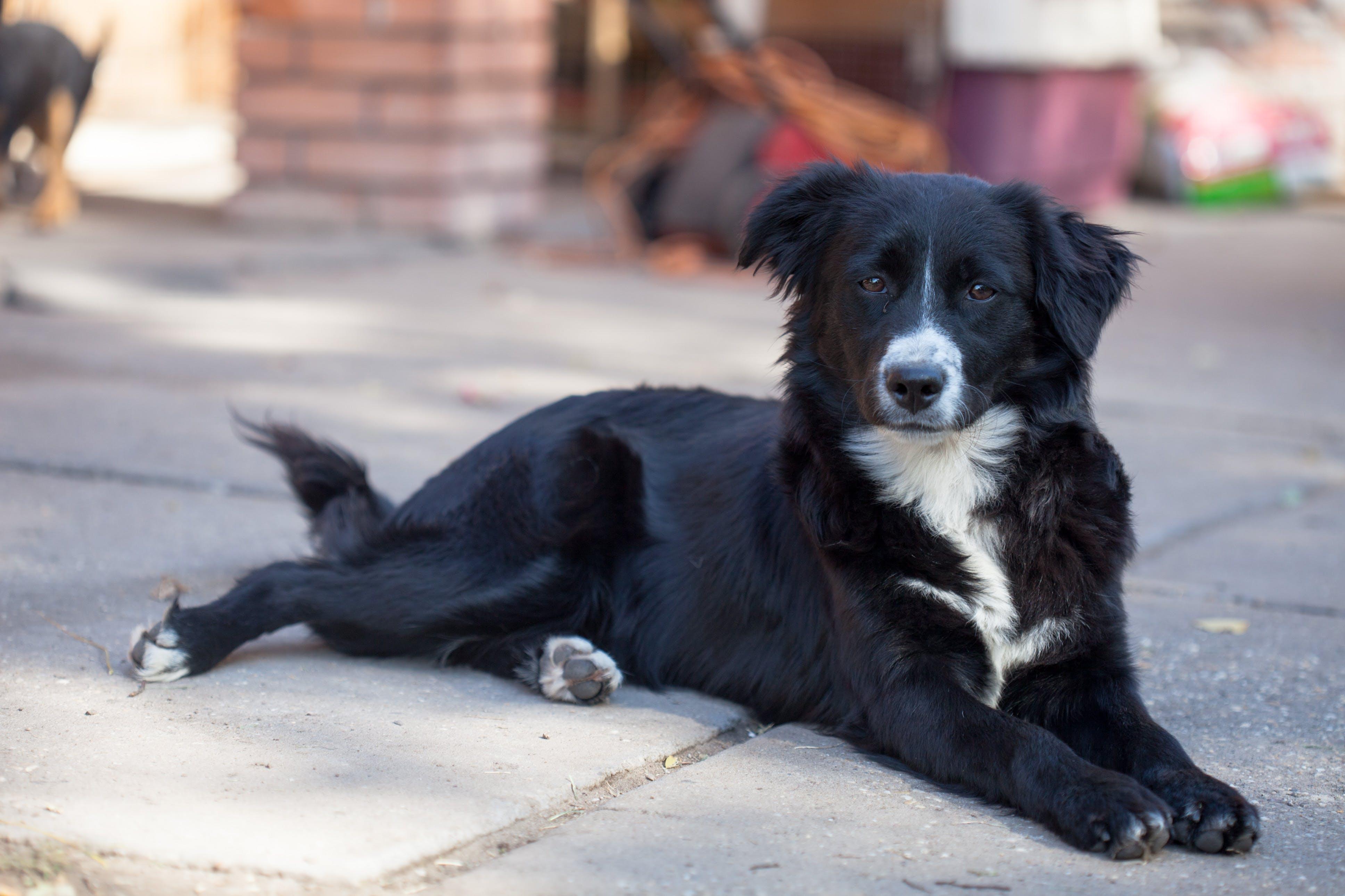 Foto profissional grátis de abandonado, animal, animal vadio, border collie