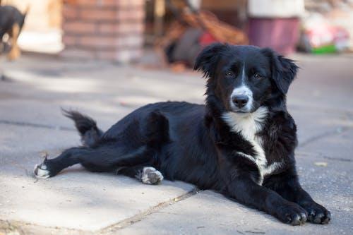 Ingyenes stockfotó állat, border collie, elhagyatott, kóbor állat témában