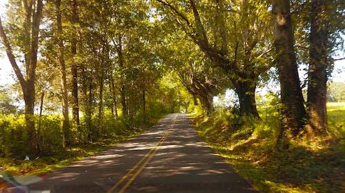 Gratis arkivbilde med bakveier, rope, trær, vei