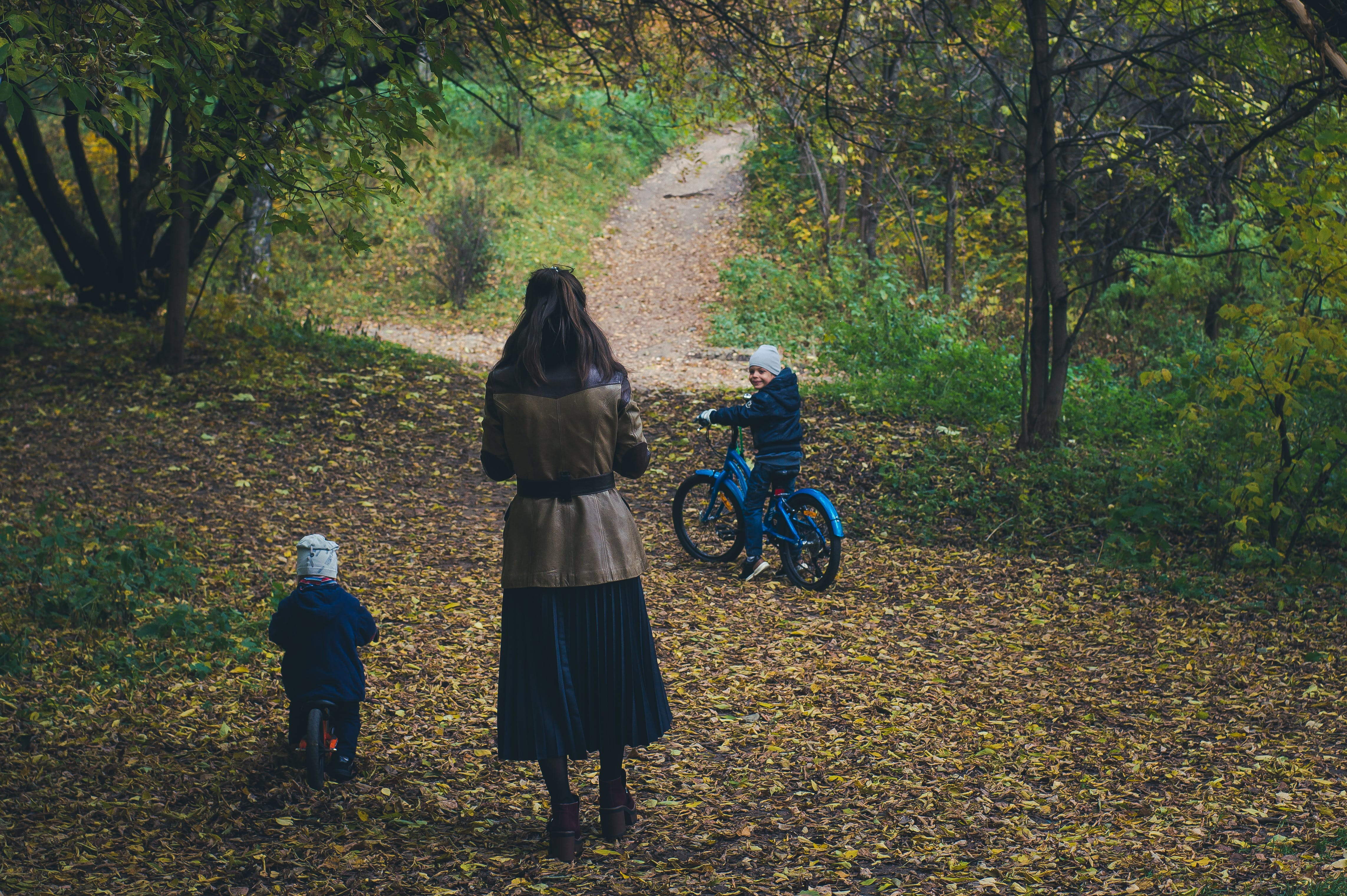 Free stock photo of adolescence, amber, autumn, autumn leave