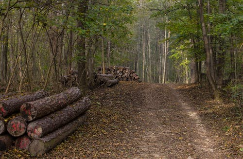 คลังภาพถ่ายฟรี ของ ต้นไม้, ทางเดินป่า, ท่อนไม้, ธรรมชาติ