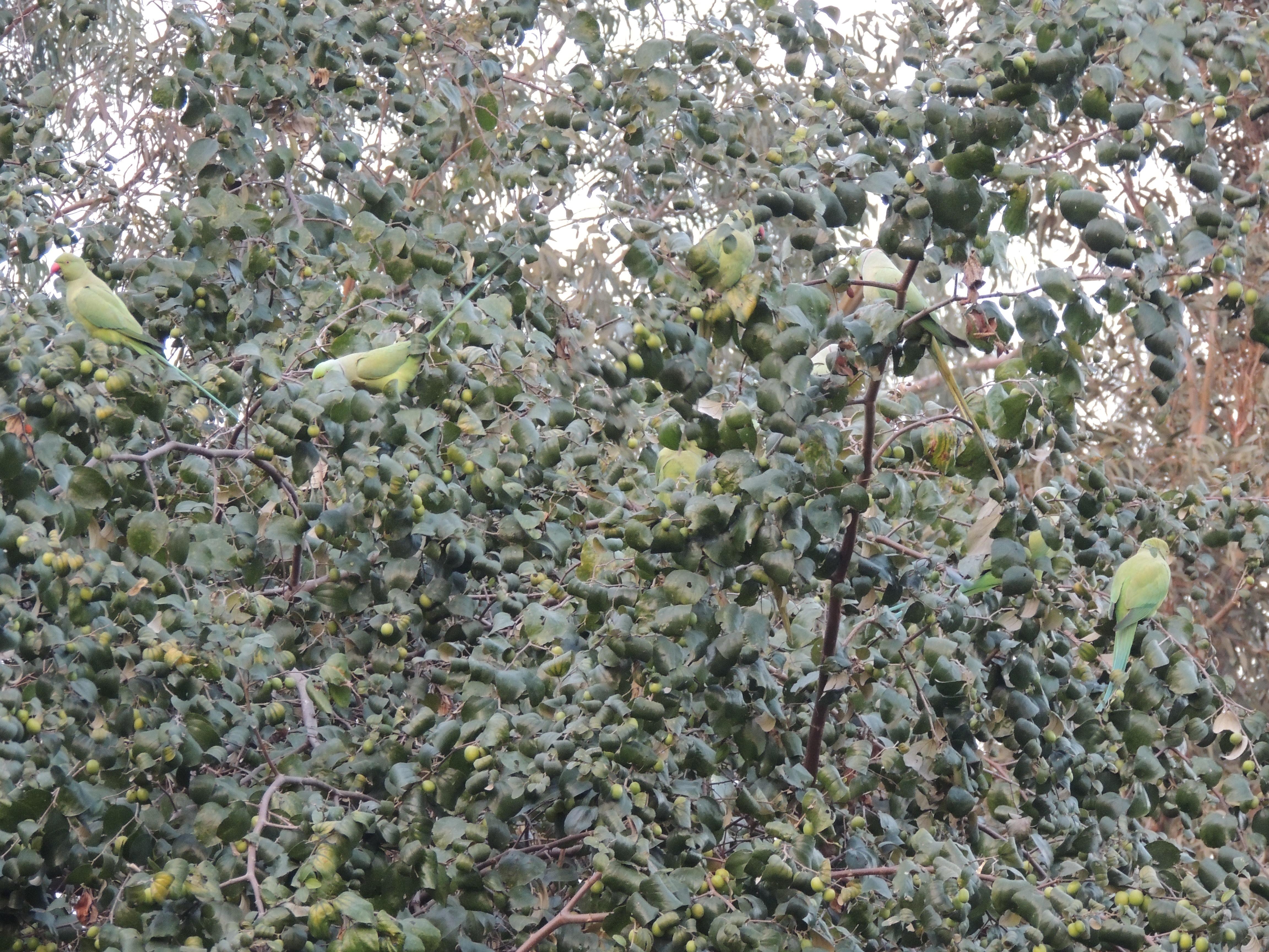Μεγάλο πουλί γυμνό εικόνες