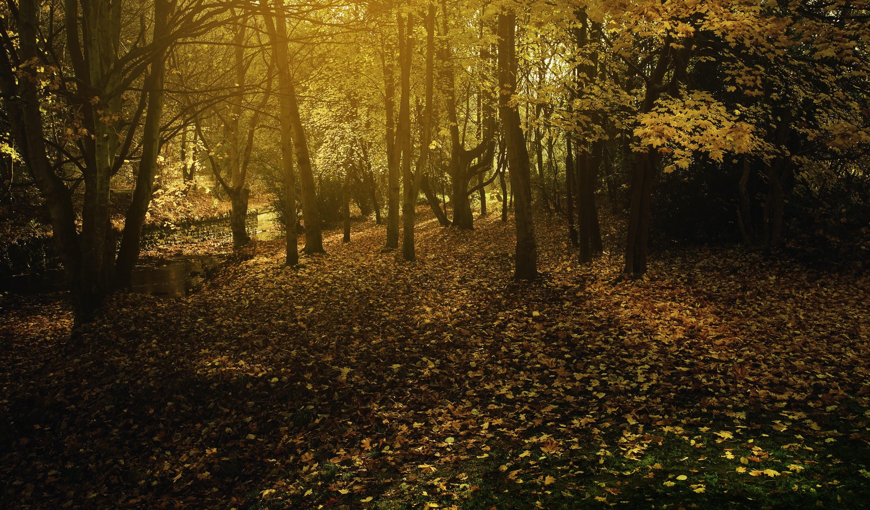 Kostenloses Stock Foto zu dämmerung, natur, wald, bäume