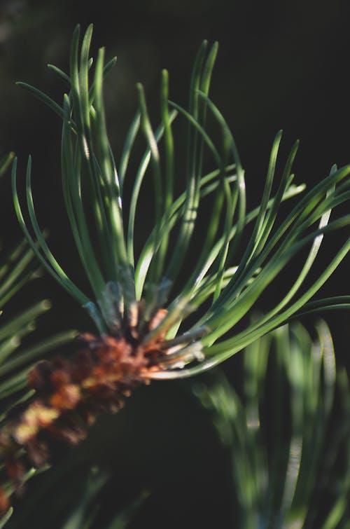 Darmowe zdjęcie z galerii z las