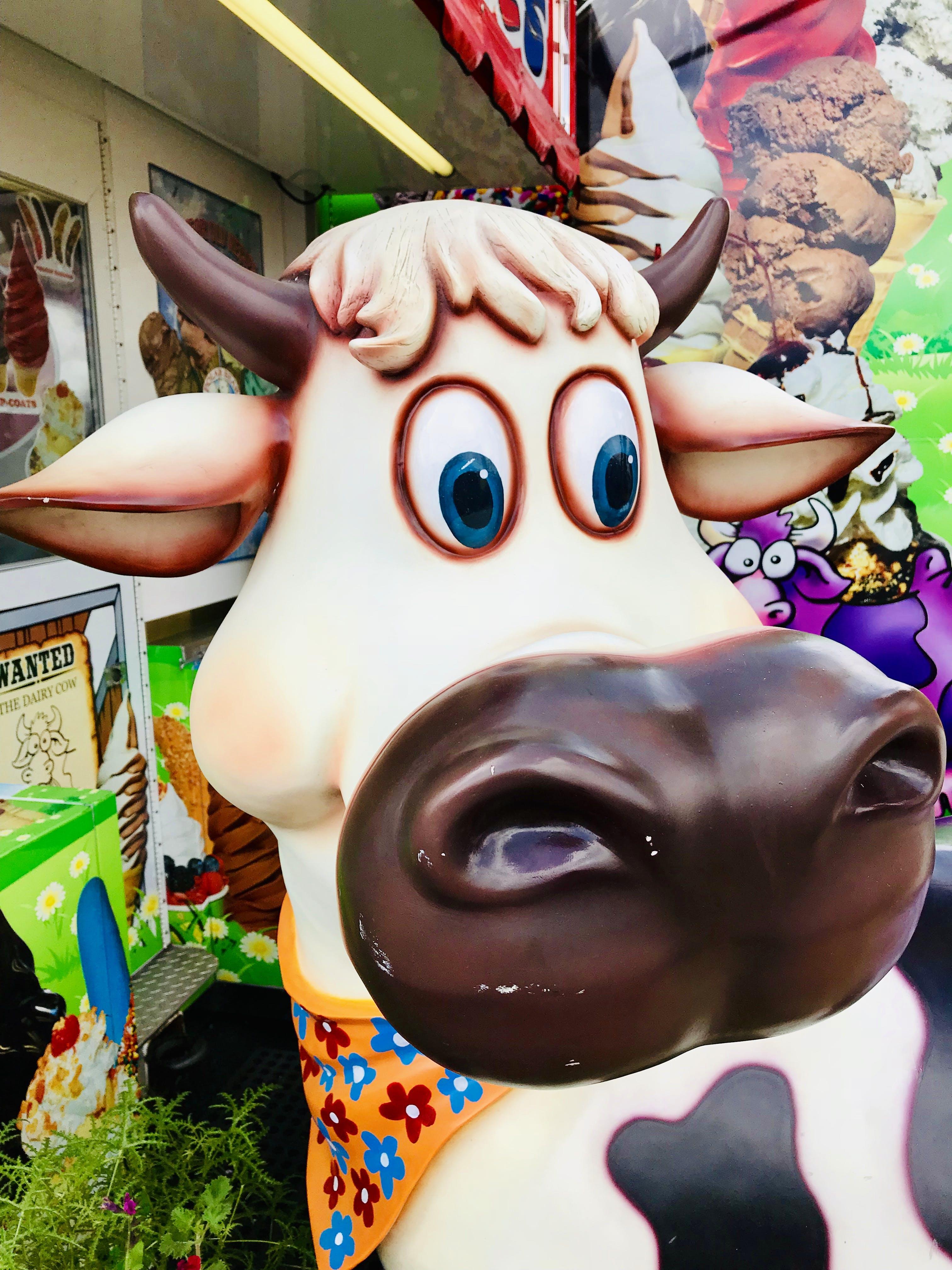 Free stock photo of brown, cow, fair, fall