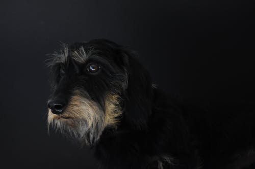 Photos gratuites de chien