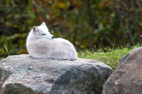 Photos gratuites de animal, blanc, étendue sauvage, fourrure