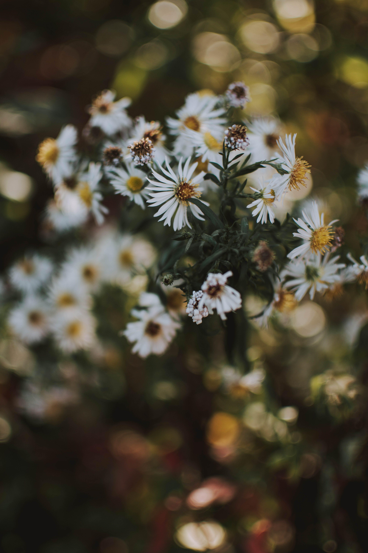 White Flowers In Tilt Shift Photography
