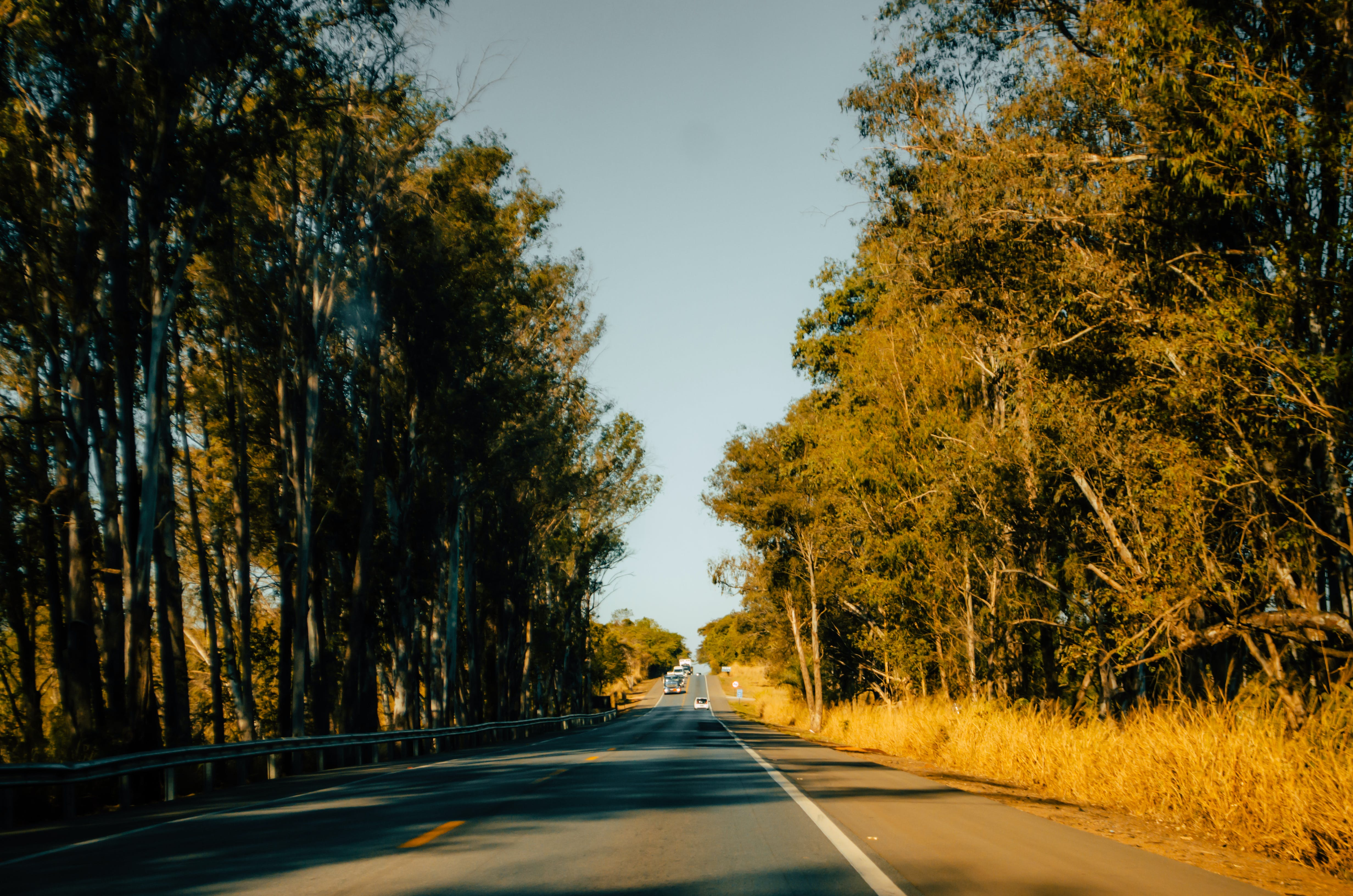 Free stock photo of forest, hipster, road, travel