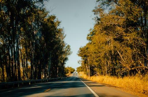 Kostenloses Stock Foto zu bäume, hipster, straße, wald