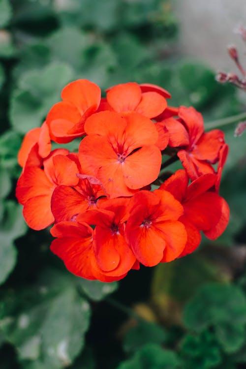 Ilmainen kuvapankkikuva tunnisteilla kauniit kukat