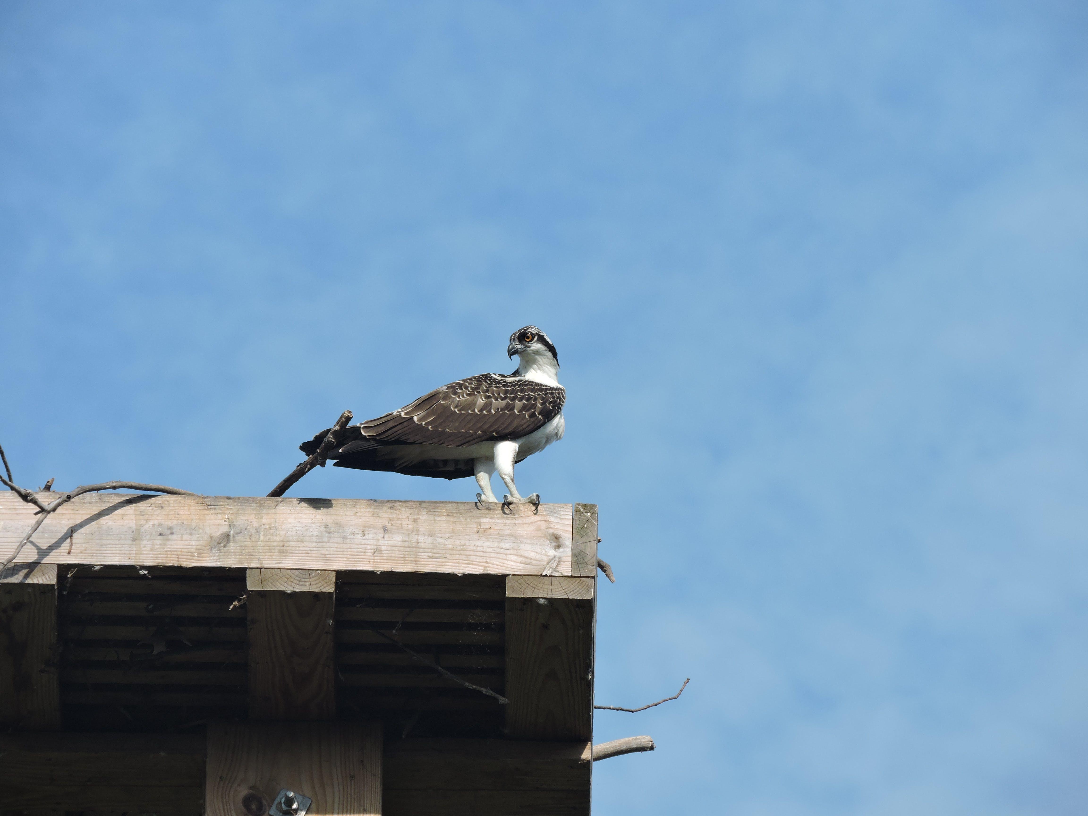 Free stock photo of bird, perched bird