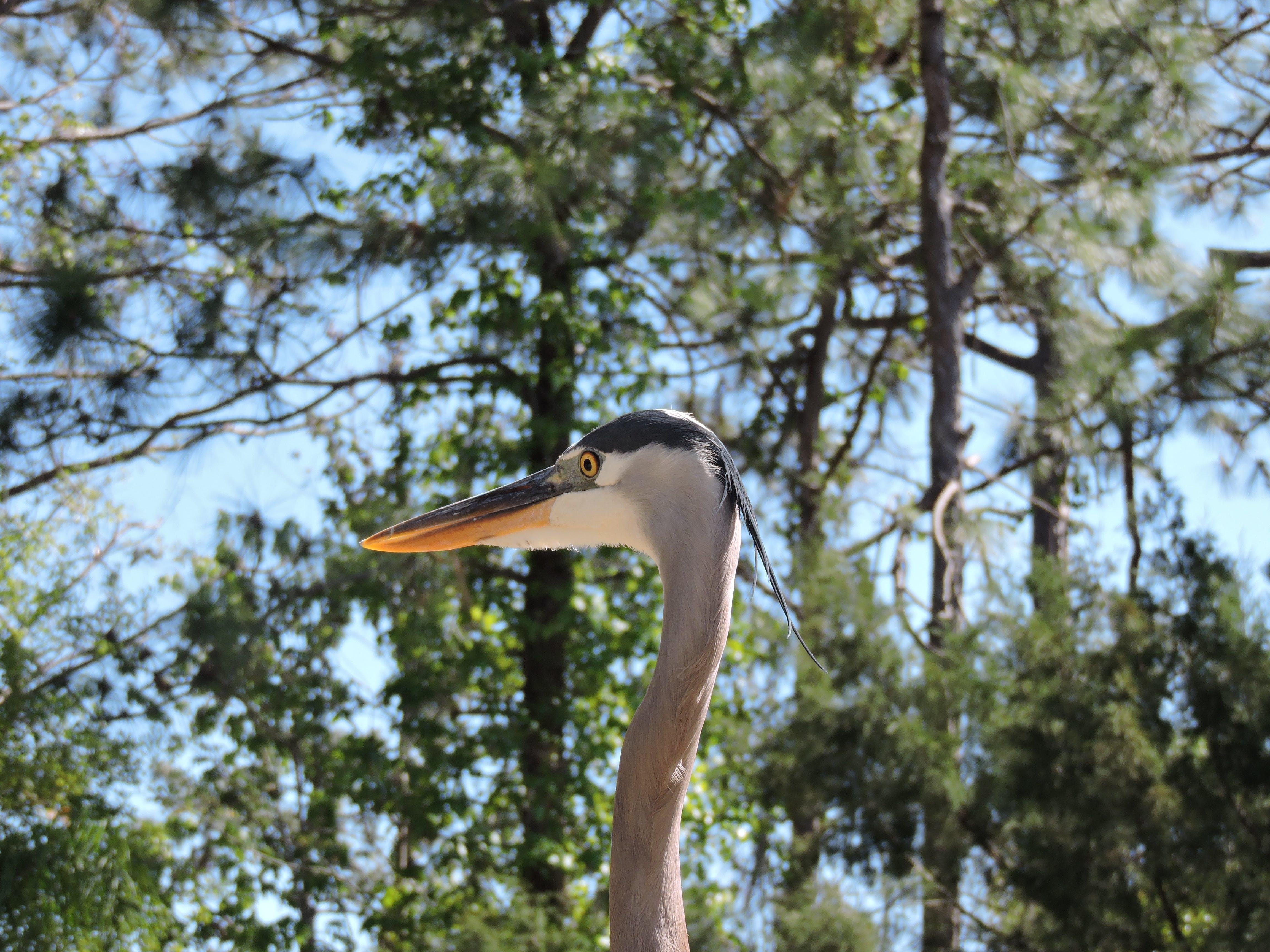 Free stock photo of bird, heron