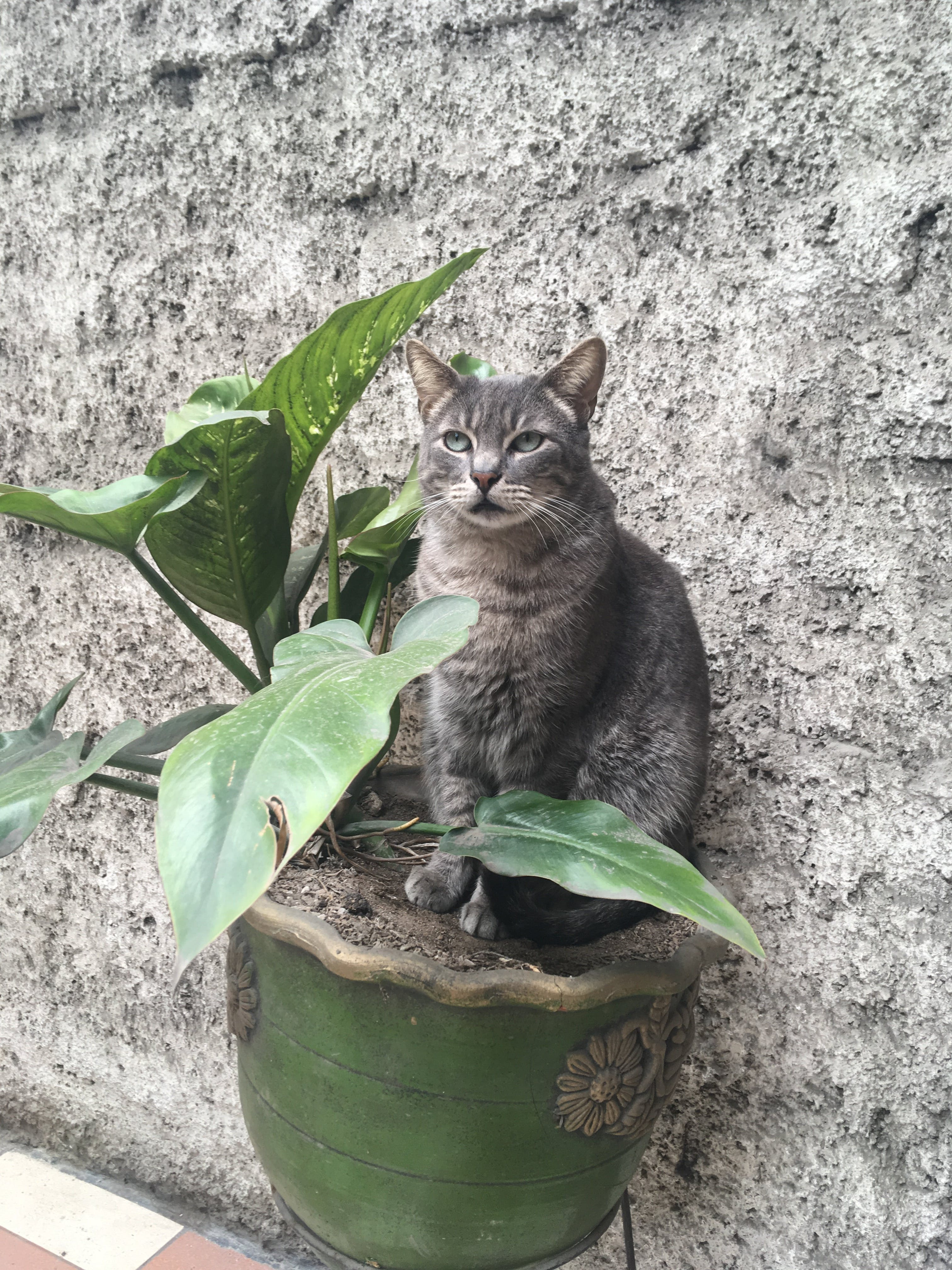 gato, katt