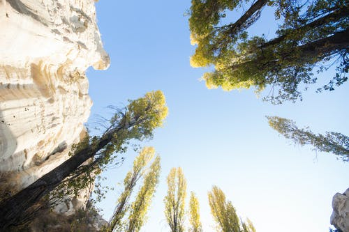 Free stock photo of cappadocia, clearsky, forest, green