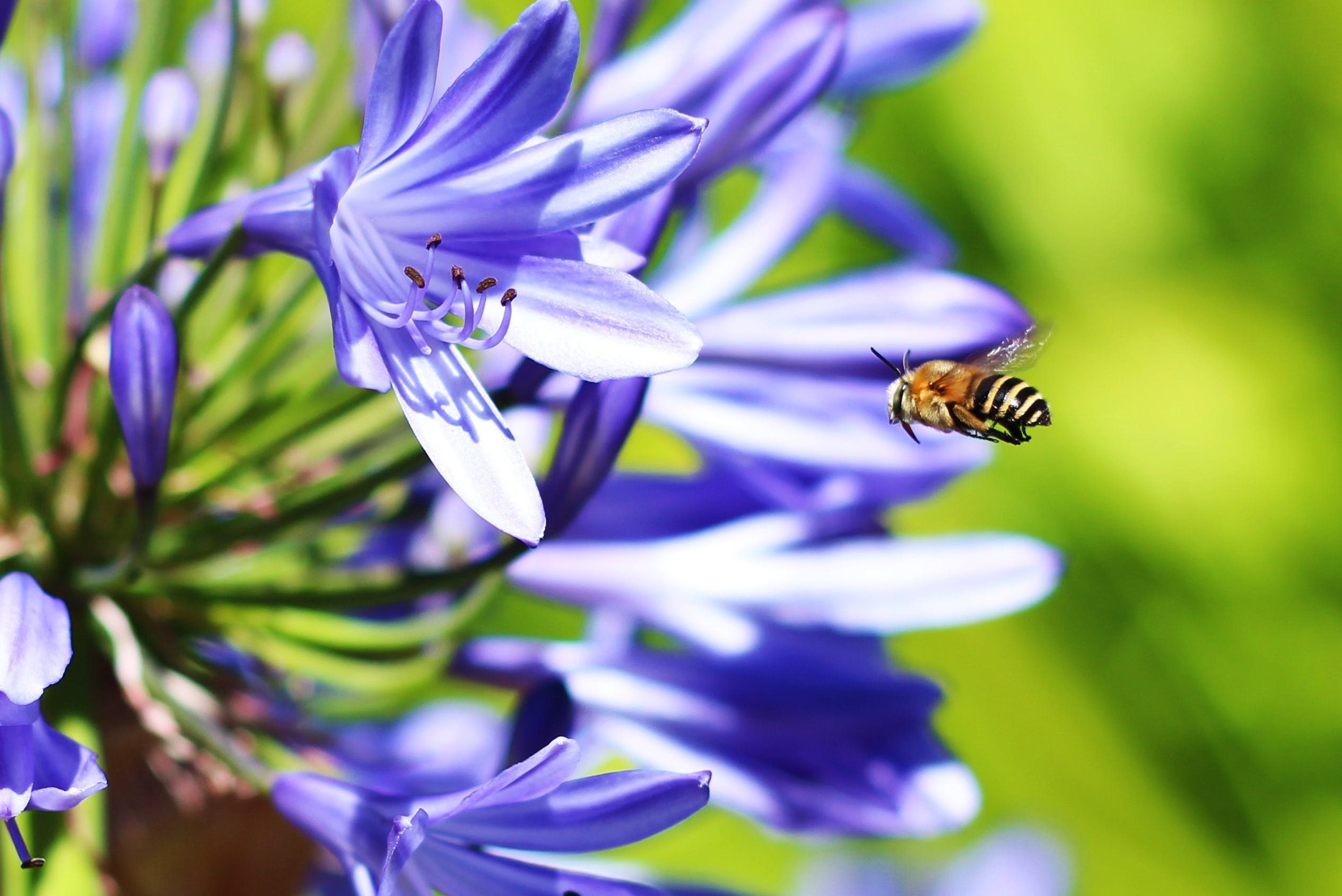 Free stock photo of nature, flower, bee, insect