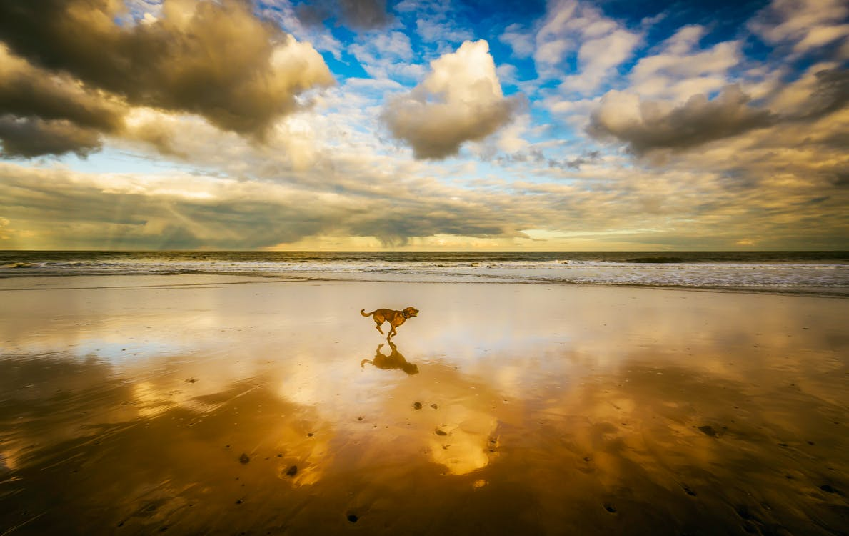 Dog Running on Seashore Under Blue Sky and White Clouds