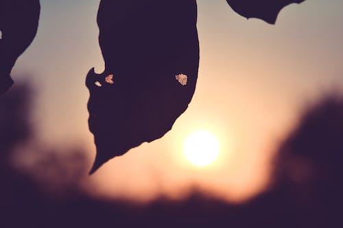 Fotobanka sbezplatnými fotkami na tému les, strom, suchý list, západ slnka