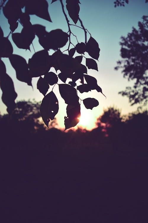 albero, foglia secca, foresta