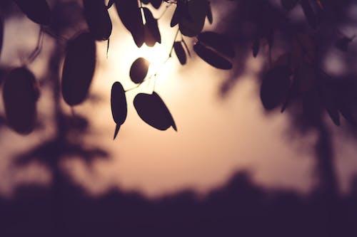 Kostenloses Stock Foto zu baum, sonnenuntergang, trockenes blatt, wald