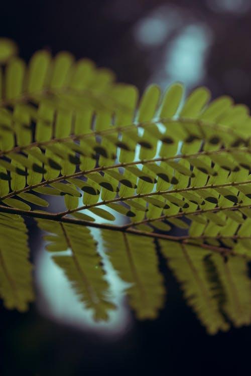 Kostenloses Stock Foto zu grün, hintergrund