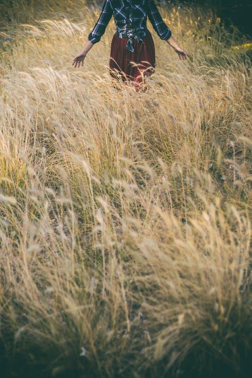 Ảnh lưu trữ miễn phí về ánh sáng ban ngày, cánh đồng, cỏ, lúa mì