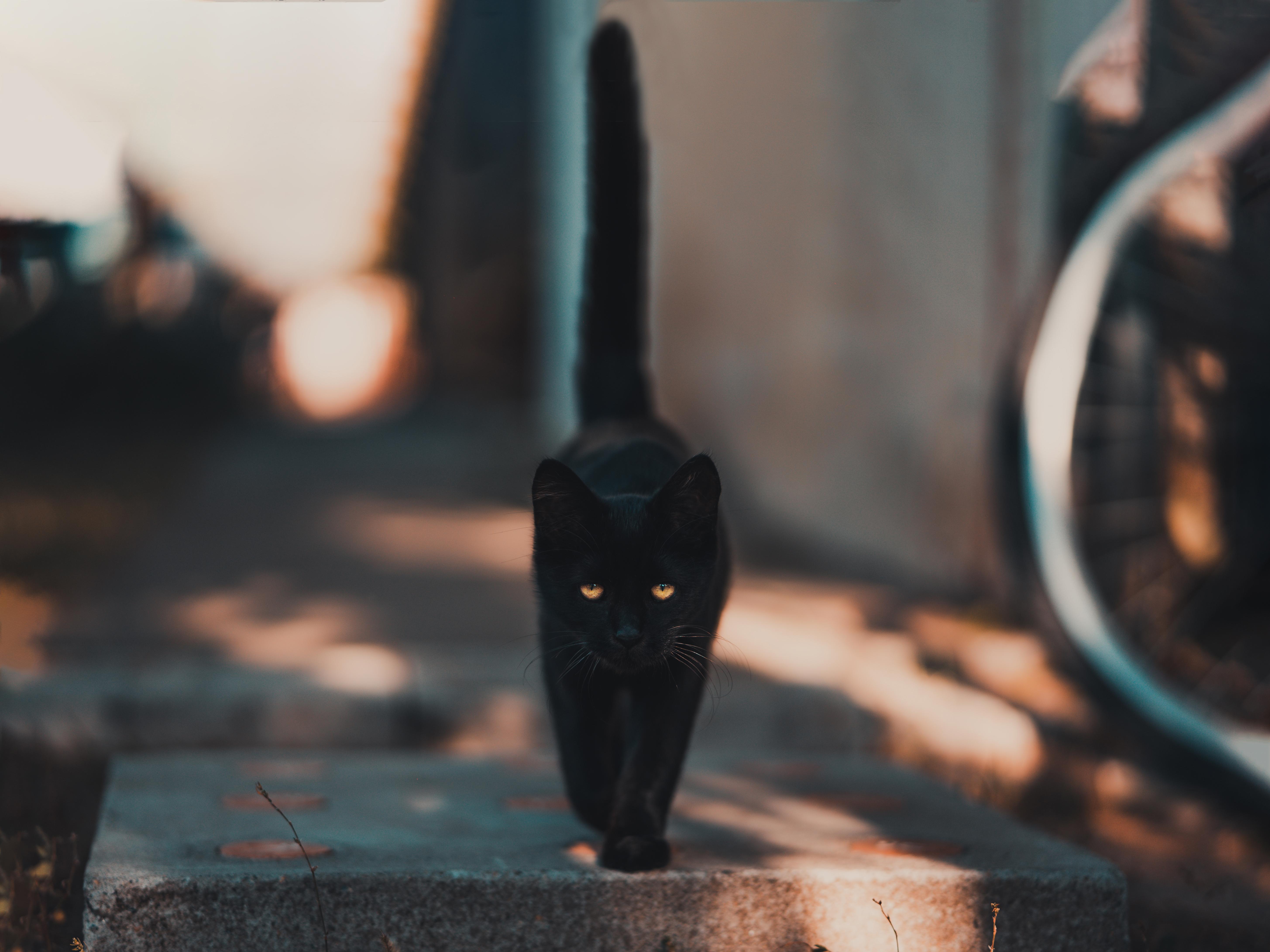 čierna čierna mačička pics