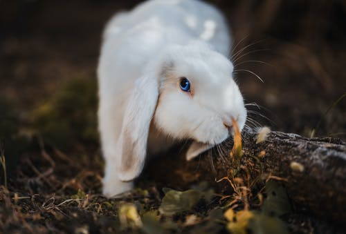 Selective Focus Photography Of White Rabbit