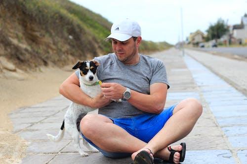 Gratis lagerfoto af cão, praia, strand