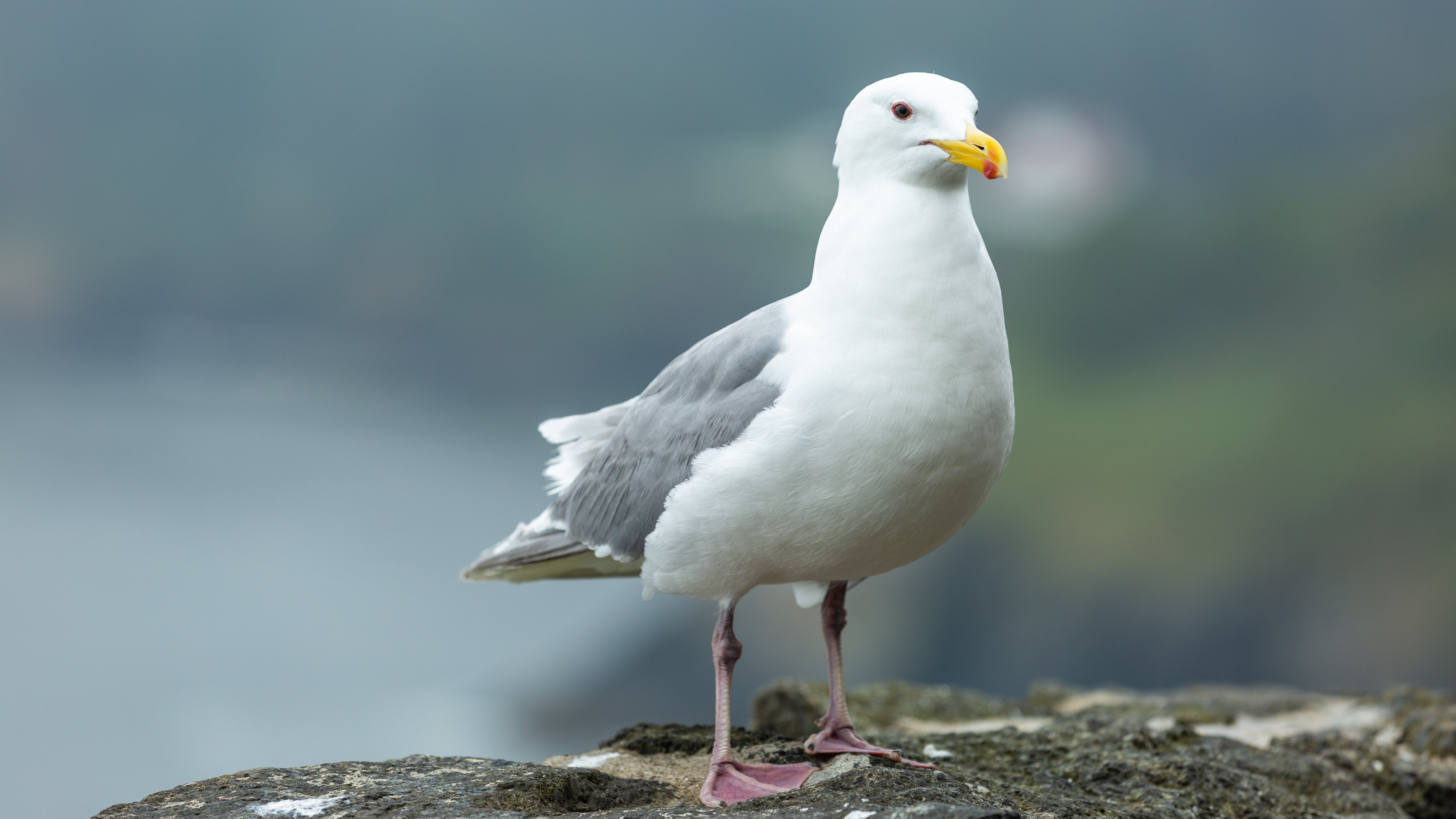 Close-Up Photo of Seagull on Rock