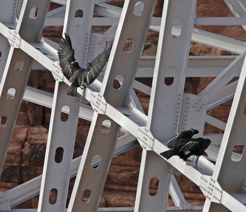 çelik, endüstri, hayvan, inşaat içeren Ücretsiz stok fotoğraf