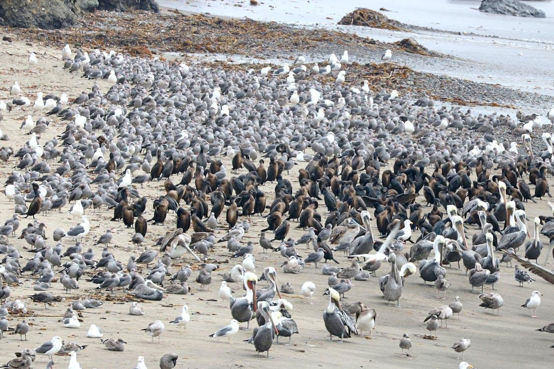 divočina, hejno ptáků, moře