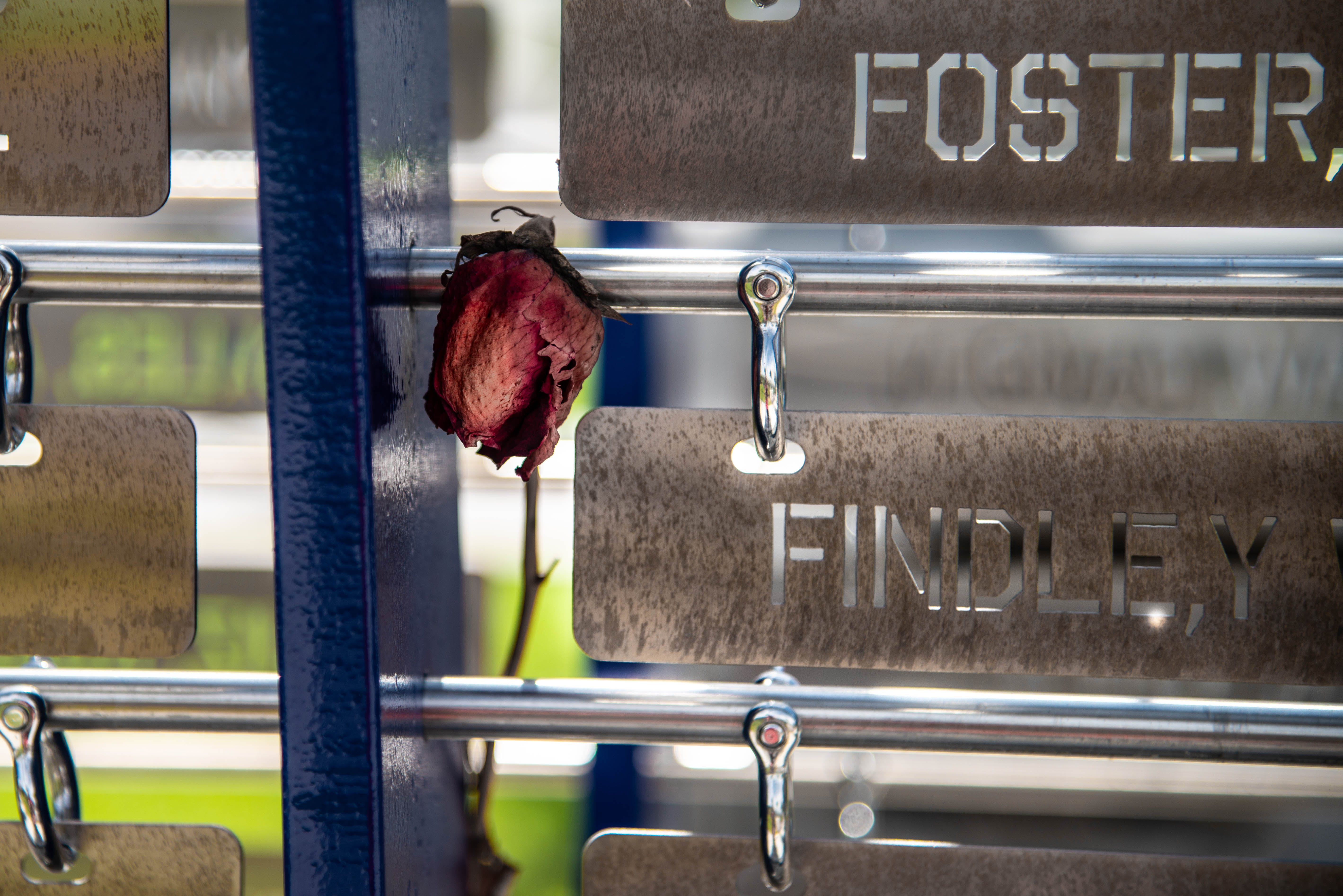 Free stock photo of flower, remember, sad, grave